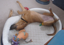 image for photo: Caico - puppy in her bed