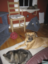 image for photo: Charlie, Caico, Rosie