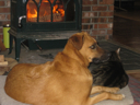 image for photo: Caico and Charlie by the fire
